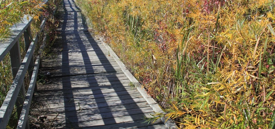 Boardwalk through Oxbows