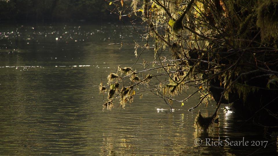 Backlit vegetation over water