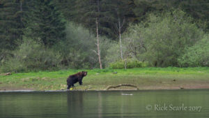 Grizzly at Riverside