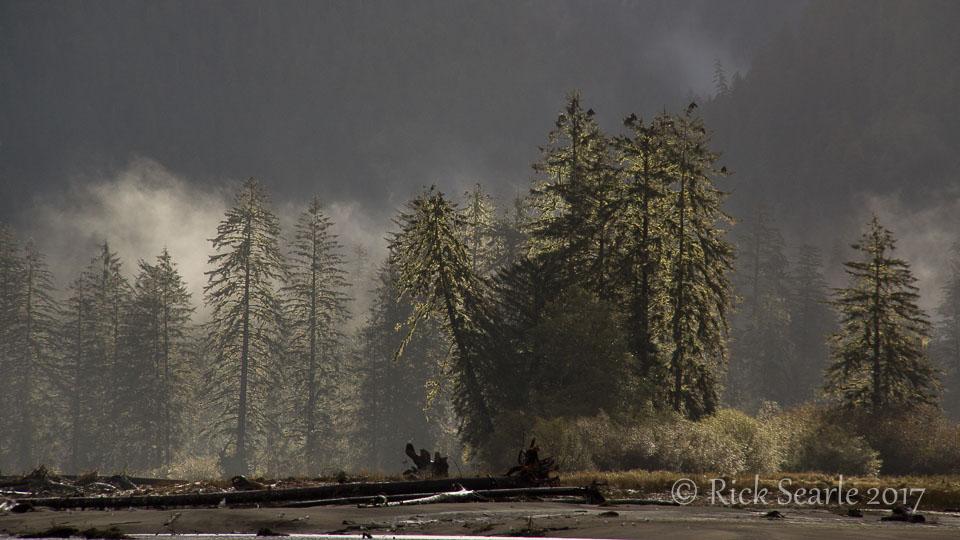 Misty Morning Trees
