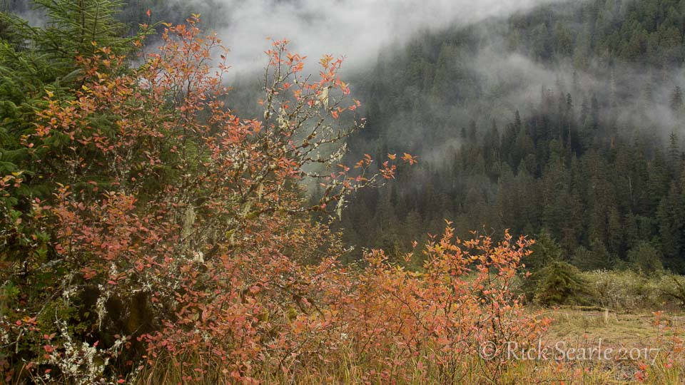 Pacific Crab Apple Fall Colours