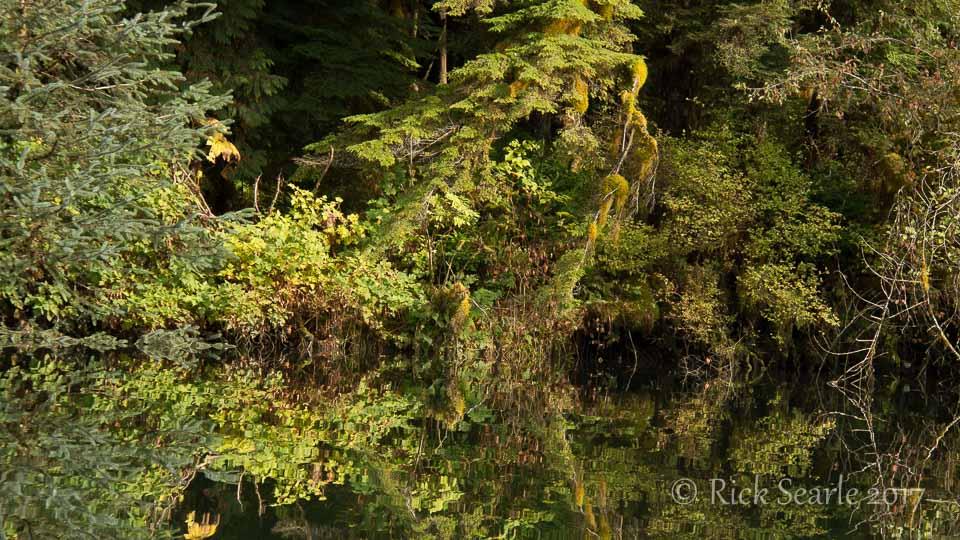 Streamside vegetation