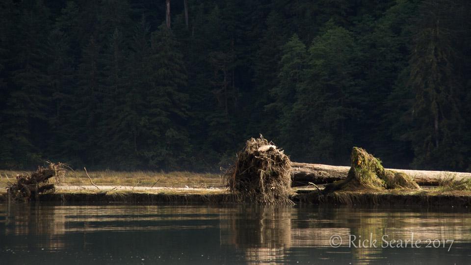 Riverside logs in early morning sun