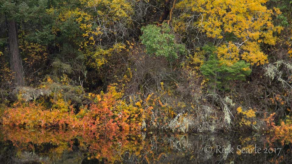 Lakeside shrubs
