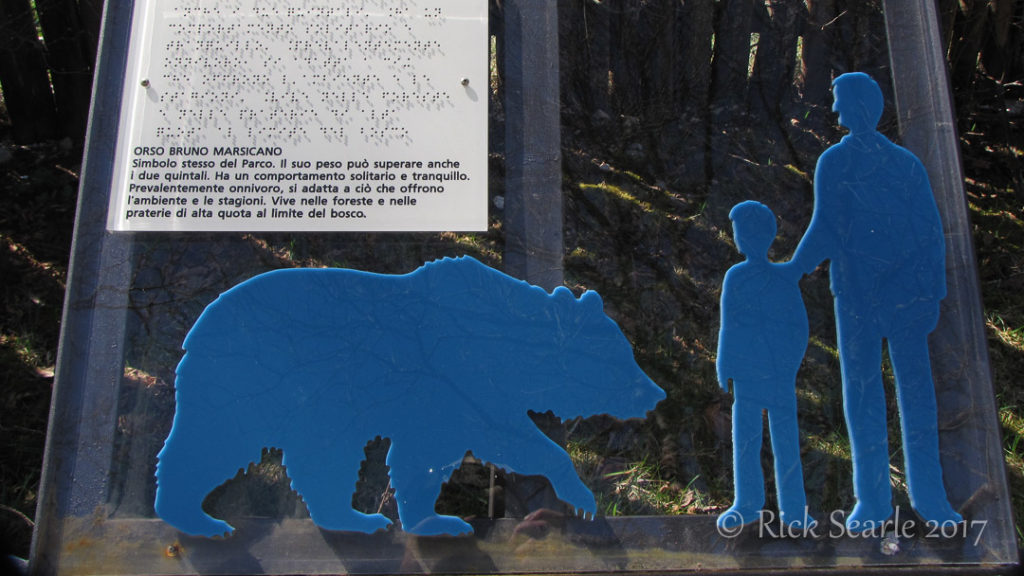 Mariscan Brown Bear Exhibit