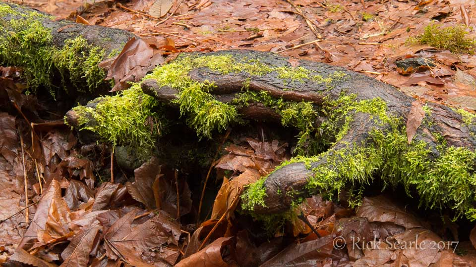 Root Covered in Moss and Leaves