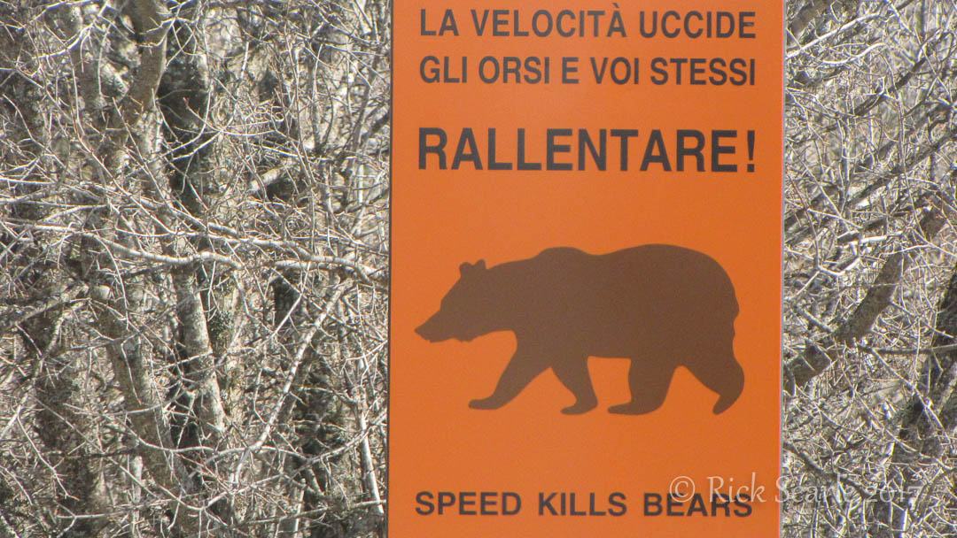 Speed Kills Bears Sign