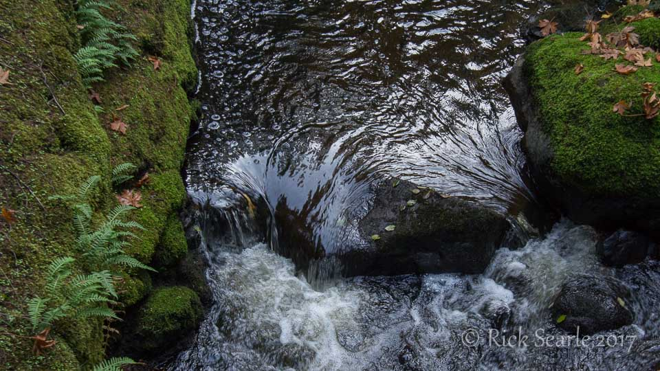 small stream with ferns and moss