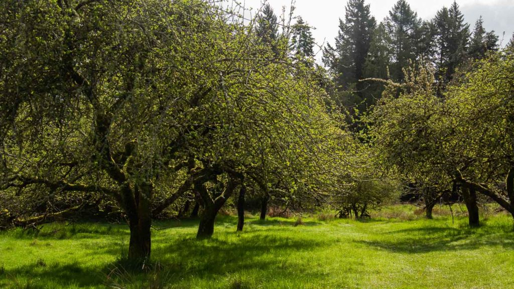 Heritage Orchard Prevost Island