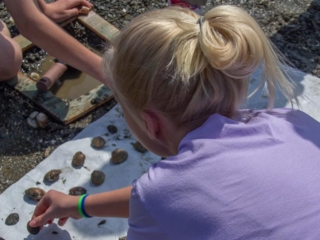 Student Counts Clams