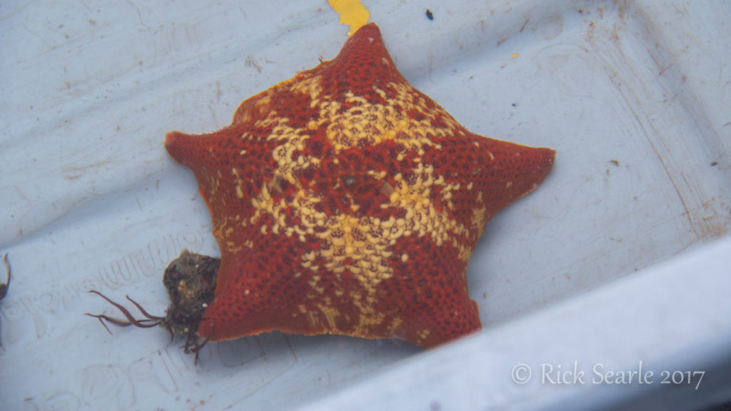 Burnaby Narrows Bat Star