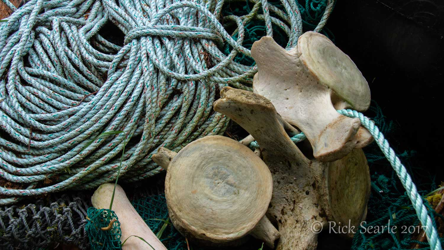 Rose Harbour Whale Bones and Rope
