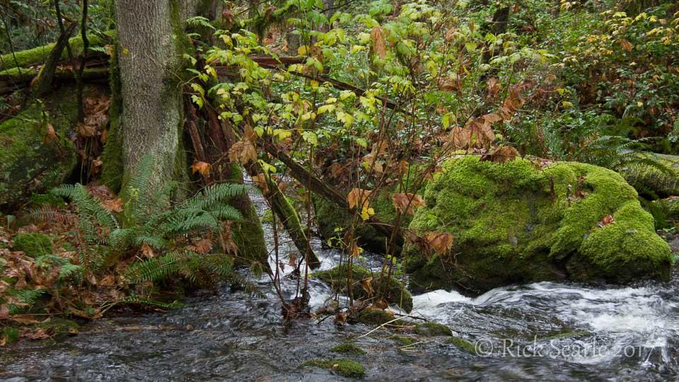 Matheson Creek