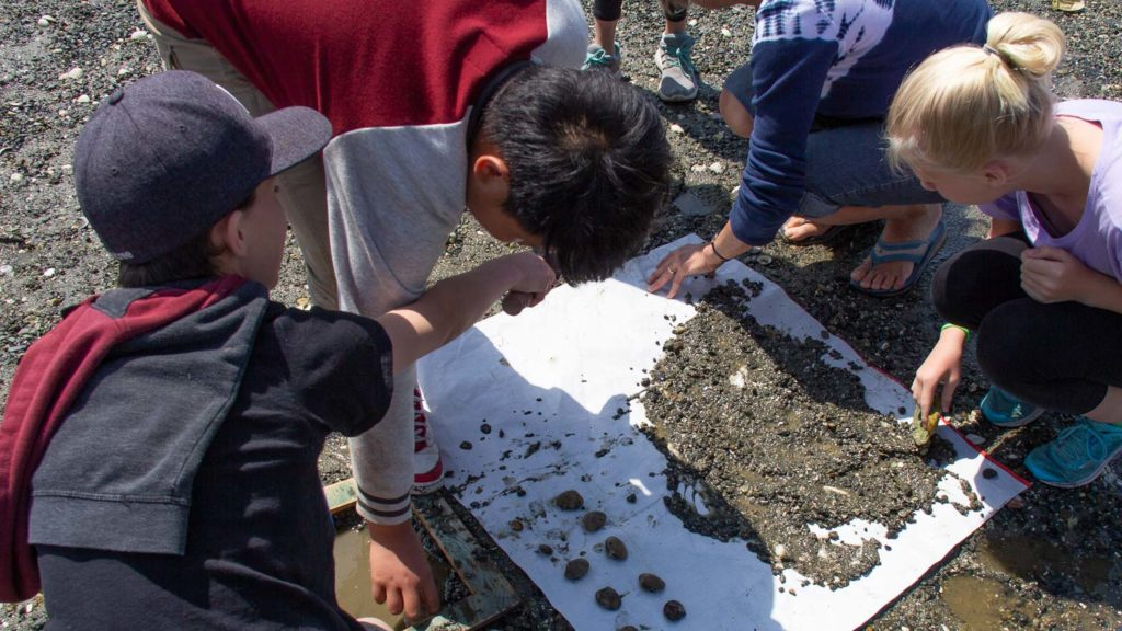 Students Identifying Clams
