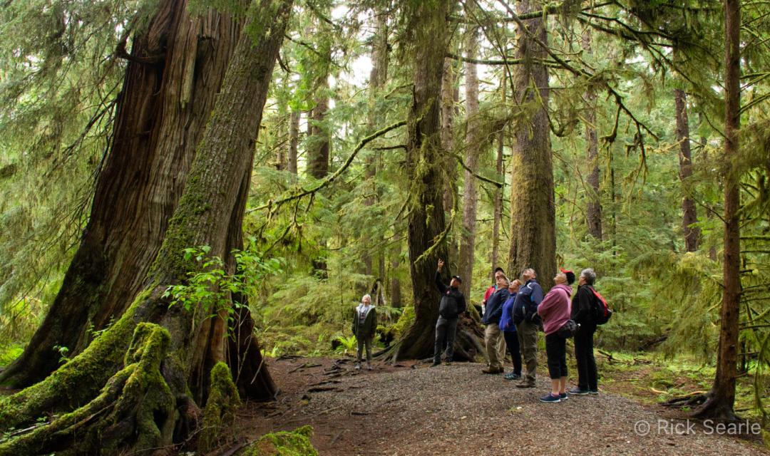 On the Golden Spruce Trail Haida Gwaii