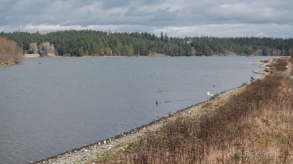 Esquimalt Lagoon Mirgatory Bird Sanctuary